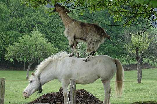 Photos rigolotes d'Ânes ! Ane-cheval-9e1d72%5B1%5D